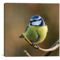 Blue Tit Resting In The Garden, Canvas Print