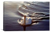 Swan In The Sunlight, Canvas Print