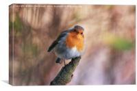 Robin With Attitude, Canvas Print