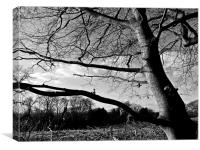 The view between the branches, Canvas Print