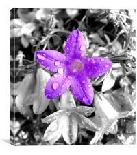 small purple flower, Canvas Print