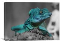 Lazy Lizard, Canvas Print