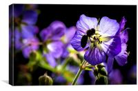 National Wild Flower Centre, Canvas Print