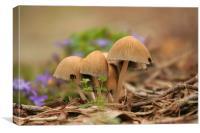 Mushroom Group, Canvas Print
