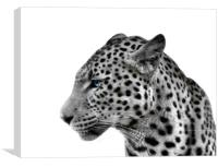 Magnificent Leopard, Canvas Print