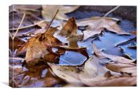 Autumn is Beginning, Canvas Print