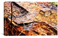 Wood Iron Rust, Canvas Print