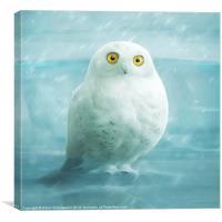 snowball, Canvas Print