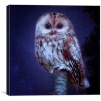 cute little screech owl, Canvas Print