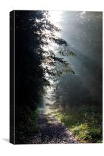 Silver Rays at Stourhead Woods, Canvas Print