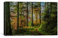 Autumnal Walk Through Beaumont's Woods, Canvas Print