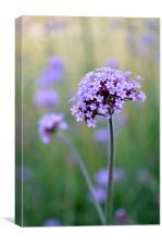 Calming Lilac Grasses, Canvas Print