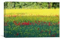 Poppy invasion, Canvas Print