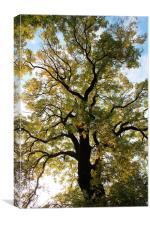 Spring tree, Canvas Print