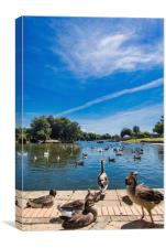 Cleethorpes Discovery Centre & Boating Lake, Canvas Print