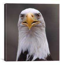 Eagle, Canvas Print