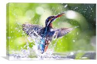 Into the Sun Kingfisher, Canvas Print