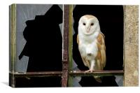 Old & New Barn Owl, Canvas Print