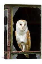 Rough Edges Barn Owl, Canvas Print
