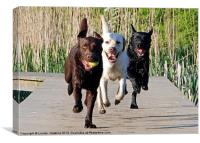 Three Labrador Dogs, Canvas Print