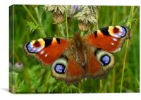 Beautiful Peacock Butterfly, Canvas Print