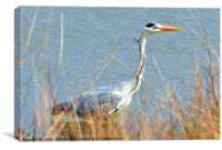 Beautiful Heron, Canvas Print