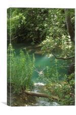 woodland pools, Canvas Print