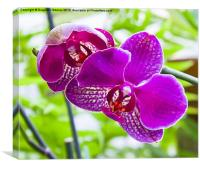 orchids in green background, Canvas Print