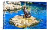 sea lion, Canvas Print