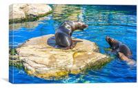 sea lions, Canvas Print