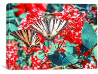 A large yellow Tiger Swallowtail butterfly, Canvas Print