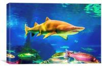 shark, Canvas Print