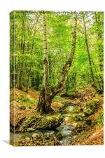Stream deep in mountain forest, Canvas Print