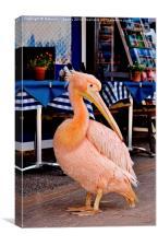 Pink Pelican, Canvas Print