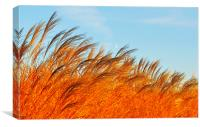 Golden Ears Of Wheat, Canvas Print