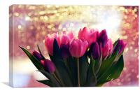 Pink and purple tulips, Canvas Print