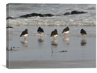 Arran Oystercatchers, Canvas Print