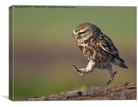 Little Owl late for work, Canvas Print