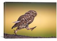 Little Owl wait for me, Canvas Print