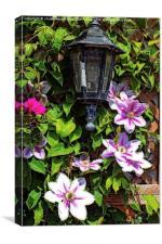 clematis around a lantern, Canvas Print
