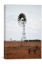 Zebra in Kenya, Canvas Print