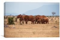 Herd of Elephants, Canvas Print