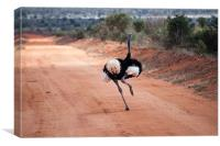 Ostrich running, Canvas Print