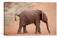 Baby Elephant, Canvas Print