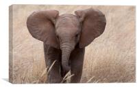 Baby Elephant close Up, Canvas Print