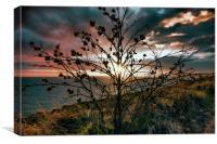 Jurassic Coast Sunset, Canvas Print