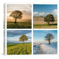 The Nowhere Tree - Four Seasons, Canvas Print