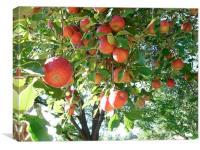 The Apple Tree, Canvas Print