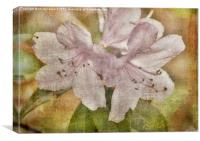 Rhododendron Canvas, Canvas Print