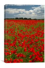The Poppy field, Canvas Print